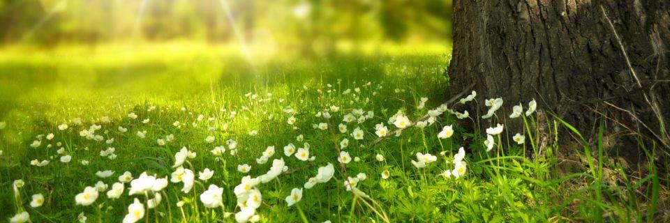"""Podrán cortar todas las flores, pero no podrán detener la primavera """"Pablo Neruda"""""""